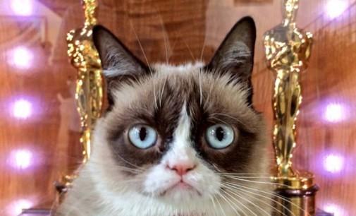 """""""Сърдитата котка"""" – неразказваната история на интернет феномена"""