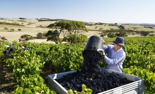 ИАЛВ стартира прием на заявления по две мерки за подпомагане на лозаро-винарския сектор 2014-2018