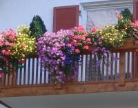 Балконите – нашите мини градини