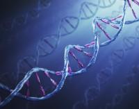 """Според учени от Оксфорд само 8,2% от човешката ДНК е """"отговорна"""" за наследствеността"""