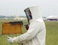 Пчели като биофилтър на летището в Хамбург