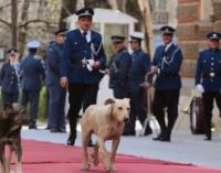 Бездомни кучета минаха преди Росен Плевненлиев по червения килим