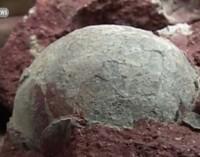 Работници в Китай намериха 43 динозавърски яйца