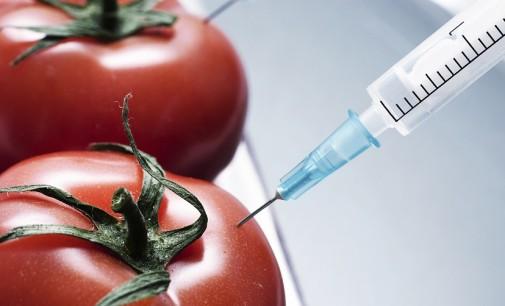 19 ГМО продукта – одобрени за Европа