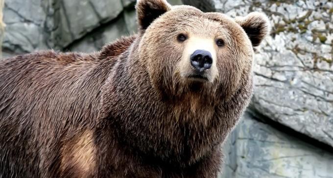 Рекламираме България с лов на защитена мечка