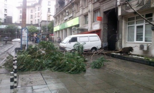 Силна буря изкорени дървета в София