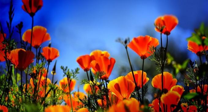 Как се поливат цветя за 2 млн. лв.? Държавата ще каже!