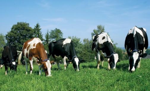 Започва ваксинация на животни срещу антракс