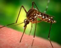 Европа даде зелена светлина на първата ваксина против малария