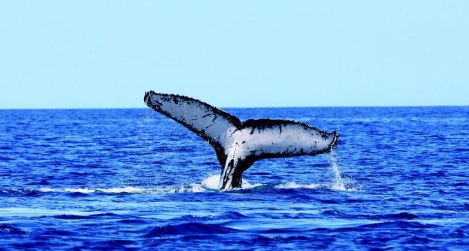 Mорският живот е застрашен заради въглеродния диоксид