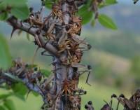 Изследователи проучват добива на готварско олио от насекоми
